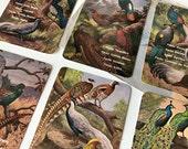 Set of six pocket calendar Peacocks  -- stationery collectibles -- paper ephemera