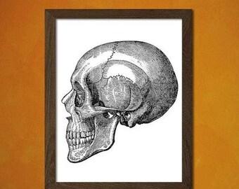 Printed on textured bamboo Art paper - Anatomy Poster  Medical Decor Human Anatomical Vintage Retro Wall Decor Home Bones Medicine H