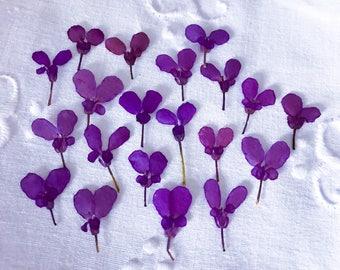Purple Flowers;Small  Purple Flowers;Dried Purple Flowers 20 Pressed Purple Flowers;Small Flowers;Cell Phone Flowers;Flowers For Jewelry