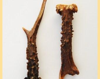 ROE DEER ANTLERS - Original Folk Art Collectable, Horn.