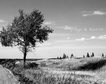 Tree photo print, lone tree, Canadian photography, black & white, fine art photography, tree landscape, nature photography, travel photo