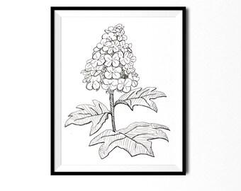 Hydrangea Print, Flower Art, Botanical Illustration, Wall Art, Pen Ink Print, Floral Art, Botanical Print, Black White Flower Print, Flora