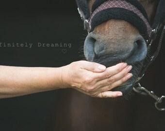 Horse Photography, Equine Photographic Art - Horse Art Decor,  Nature Photography