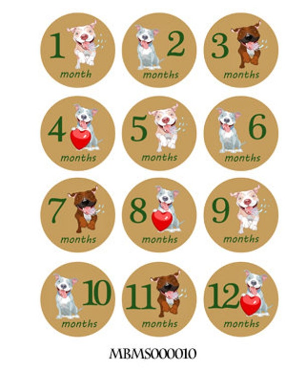 18 Month Stickers: Pitbulls Monthly Baby Stickers. Onesie Month Stickers
