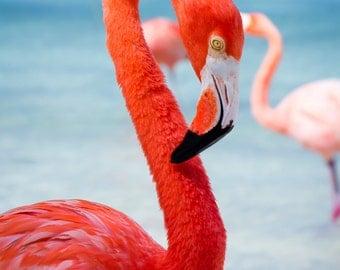 Photograph on Canvas of Flamingo