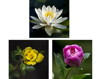 Set of 3 Prints, Flower Photography Set, Fine Art Photography Set, Botanical Print Set, Flower Pictures, Photo Gift Set, Wall Art Set