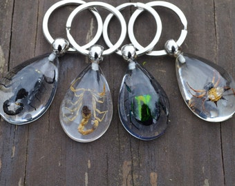 Insect Keychains (4 different bugs to choose from!)