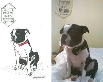 Sketch-a-Pet