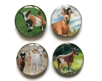 Goat magnets or goat pins, farm animal magnets or pins, refrigerator magnets, fridge magnets, office magnets