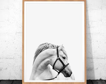 Horse Print, Horse Photo, Horse Photography, Horse Art, White Horse, Instant Download, Horse Printable Art, Animal Poster, Horse Home Decor
