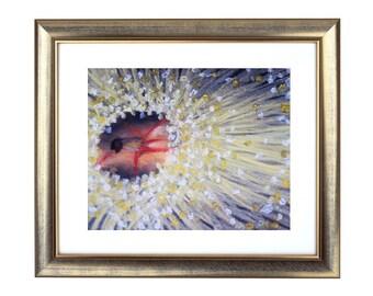 Wattle Drawing Print, Wattle Pastel Painting, Australian Wattle Artwork, Australian Flowers, Australian Art Prints, Yellow Decor, Floral Art