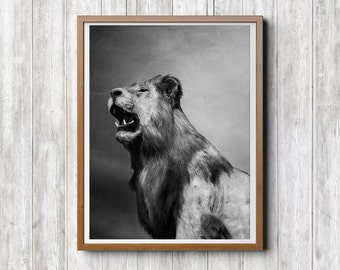 Lion Print, Lion Photography, Instant Print Download, Black and White Print, Lion Poster, Kids Room Printable Instant Digital Download