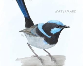 Australian male Blue Wren. A4 artist print.