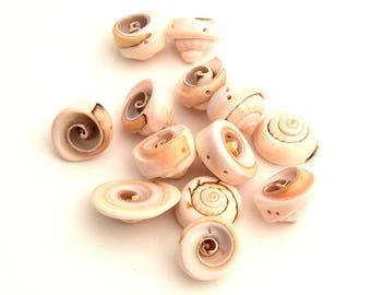 Perles de coquillage puka spirale  COQ201602 - lot de 10/20 unités