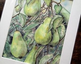 Old Pear Tree Giclee Print