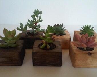 50 Handmade succulent wedding favors