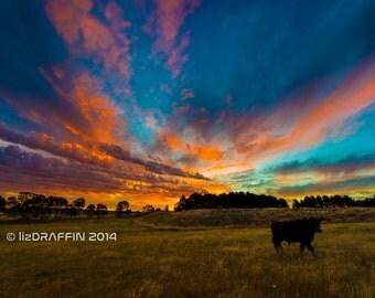 "Farming Landscape Sunset Landscape Digital Download Print Photo Digital Fine Art Photography ""Cow at Sunset"""