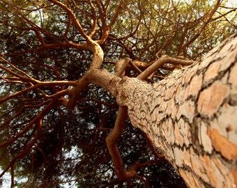 Under the tree - Tuscany sea - Nature - Photography - Photo - Art Photo - Italy Photo - Baratti - Populonia -Etruschi - Tree