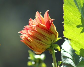 Flower in the Sun photograph