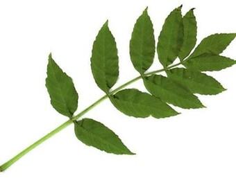 Ash - anti-inflammatory, Depurative infusion