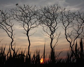 Dancing Trees at Sunset - Nature Fine Art Photography