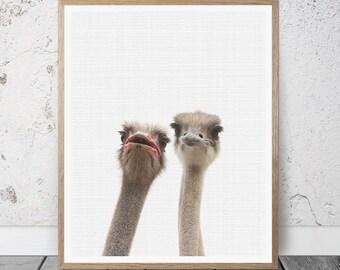 Ostrich Print, Ostrich Wall Art, Ostrich Printable Art, Ostrich Photography, Ostrich Art,Ostrich Decor, Ostrich poster