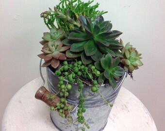 Tin Pail Succulent Garden