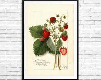 Strawberry prints, strawberry artwork, strawberry decor, strawberry art, nursery art set, large wall art, vintage home decor, fruit prints