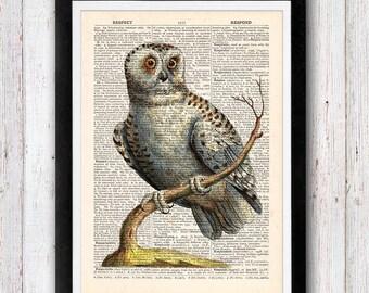 Grey Owl Art Print / Bird Dictionary Art / Owl Wall Art Vintage Dictionary Page Book  Print / Office Art / Wall Art Prints / Wall Decor