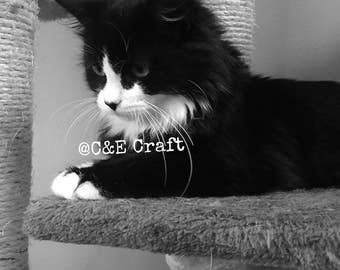 Cat Photography Black and White Cat Photography Art Photography Cat Photograph Cat Portrait Instant Download Print