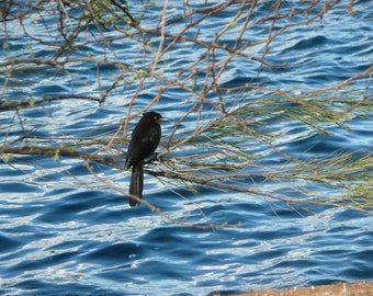 Bird Perched by the water