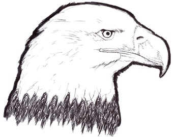 Bald Eagle Pen and Ink