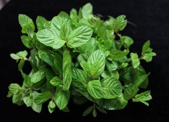 Organically Grown Catnip Herb