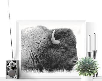Buffalo Print | Buffalo Photograph Printable |  Black and White | Nursery Decor |  Bison Art | Boys Room Art | Kids Room