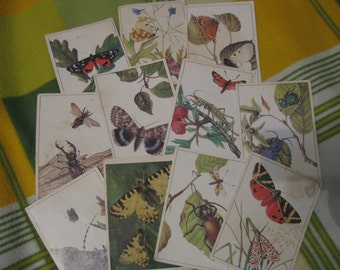 A set of 11 vintage cards with insects ... 1980 / butterflies / bugs