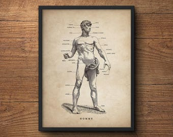 Anatomy poster of human body, Anatomy illustration, Anatomy decor, Human anatomy poster, Anatomy print, Medical student gift, Wall art