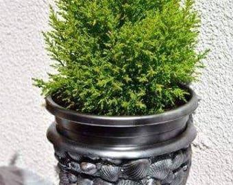 Seashell flower pot