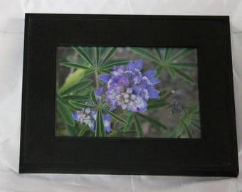 Purple or Lilac Flower Photograph