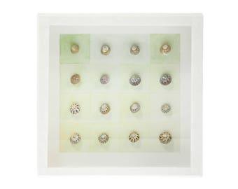 Sea Shells shadow box - Watercolor series 1
