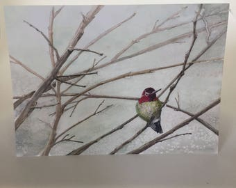 Anna's Hummingbird on Bare Dogwood Branches Blank Greeting Card