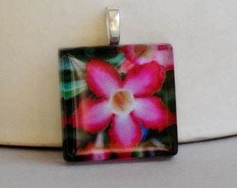 Starflower Fine Art Photo Glass Tile Pendant - Starflower -  Nature Photography