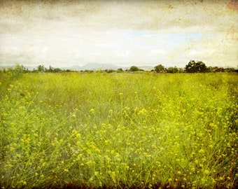 "Landscape photography flower meadow rustic wall art olive green decor california wall art nature photography ""Mustard Field"""