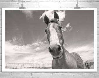 Horse Photography, 2 Broke Girls, Horse Pictures, Canvas Print, Equestrian Art, Equine Print, MurrayBolesta, Western Art, Art on Canvas