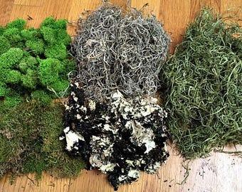 Attractive Moss, Moss For Terrarium, Reindeer Moss, Sheet Moss, Spanish Moss, Lichen