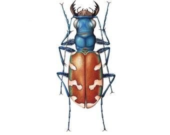 Tiger Beetle Print 8x10