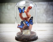 Small GLASS DOME with Stomach and Butterflies, Darkly Romantic Odd Gifts, Weird, Cabinet - Choose the Butterflies Color-