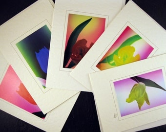 Pack of 5 Greetings cards of Tulips