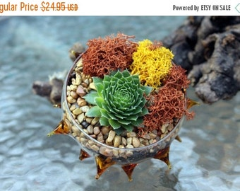 20% off Spiny copper succulent planter-Hens and chicks-Unique re-positionable planter-Hand blown glass-Reindeer moss