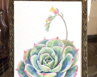 Pretty Little Succulent Painting   Vintage Frame