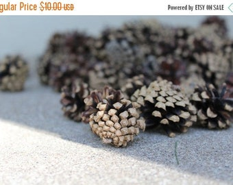 SALE SALE SALE Pine Cones Natural Lot One Pound Small Crafting Supplies Holidays Christmas Winter Home Cabin Cottage Decor Decorating